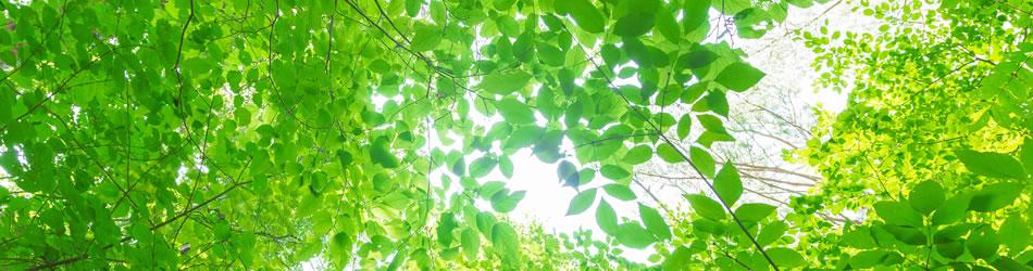 山梨県緑化センター