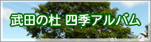 武田の杜 四季のアルバム