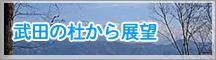 武田の杜から展望