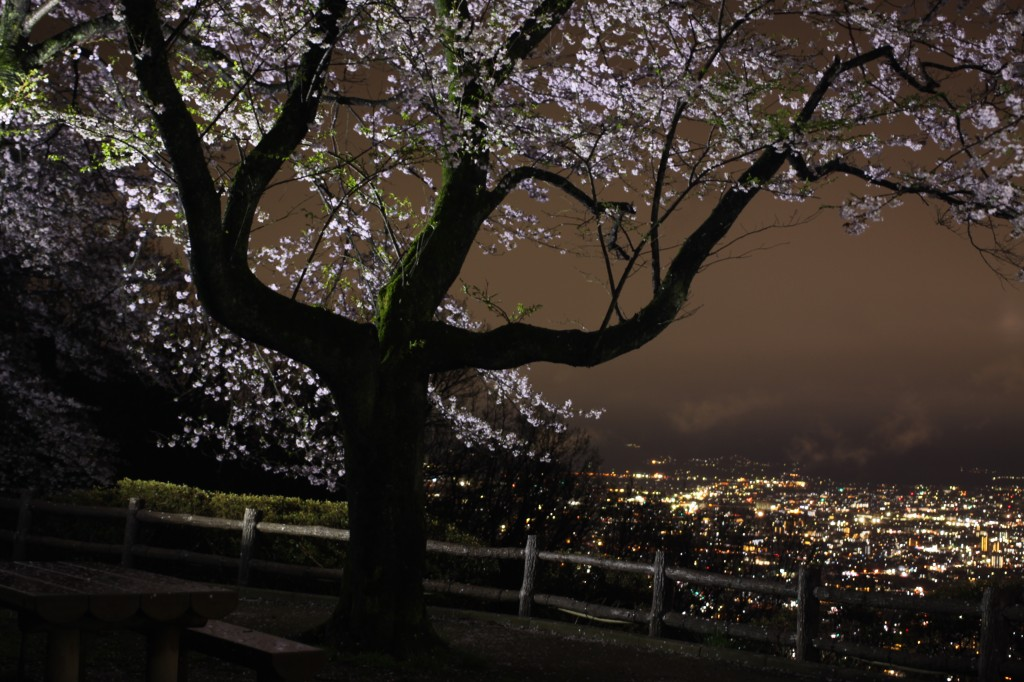 武田の杜 吉野桜ライトアップ