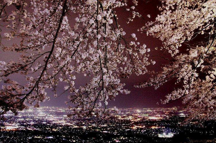 桜のライトアップ HP用